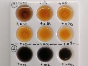 lycee-moliere-laboratorio-svt-2